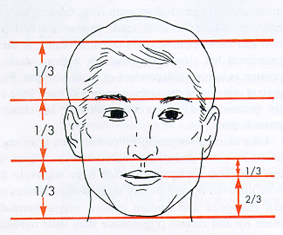 OrthoED - Evaluation of the face 10