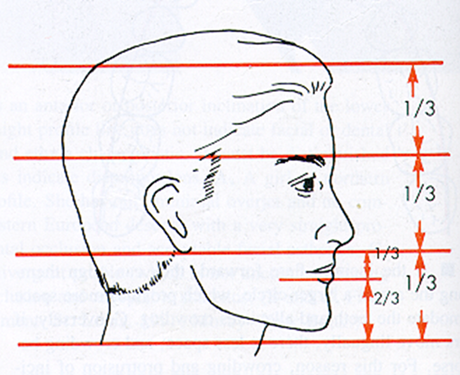 OrthoED - Evaluation of the face 11